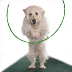 Have Your Dog Leap Through A Hoop