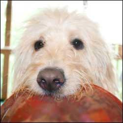 Teach Your Dog Fetch