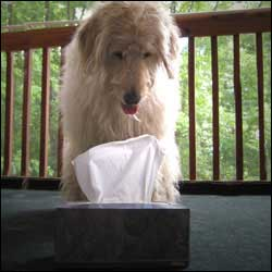 Have Your Dog Bring You A Tissue