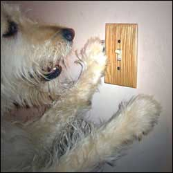 Have Your Dog Turn On A Light
