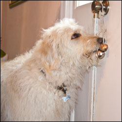 Teaching Your Dog To Ring The Bell