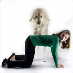 Teach Your Dog High Five