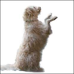 If You Have Something In Your Hand That Dog Wants To See He May Display His Curiosity By Pawing Similarly Paw Containers Such As