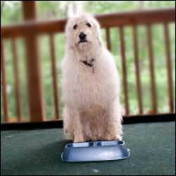 Esa Dog Couch Training