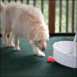 You Know What Makes Dog Training Simple Finding Ways To Increase Your Dogs Impulse Control