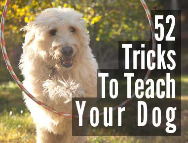 52 Tricks to Teach Your Dog