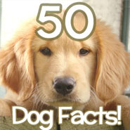 50 amazing dog facts