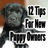12 Tips for New Puppy Owners