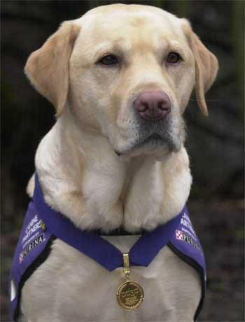 endal service dog