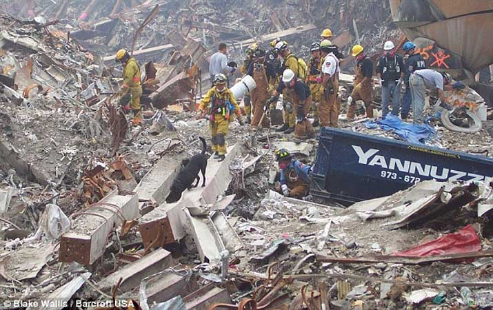 rescue dog 9/11
