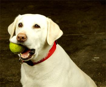 Πώς να φτιάξετε ένα παιχνίδι για τον σκύλο σας...