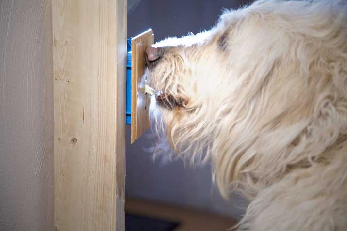 lightswitch dog trick